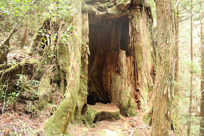アトモス杉