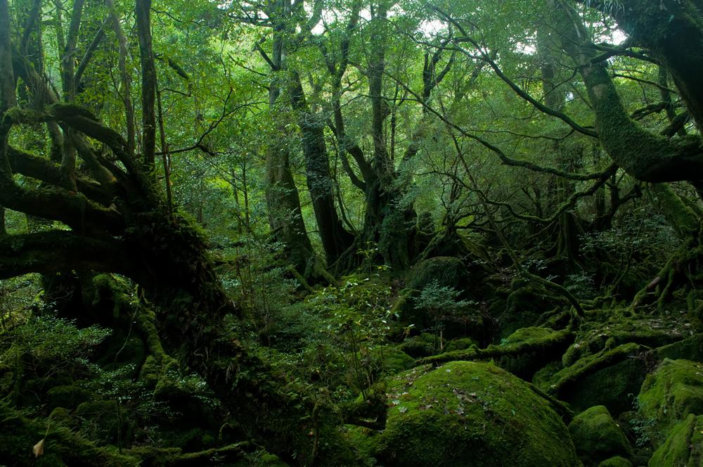 屋久島の深い森