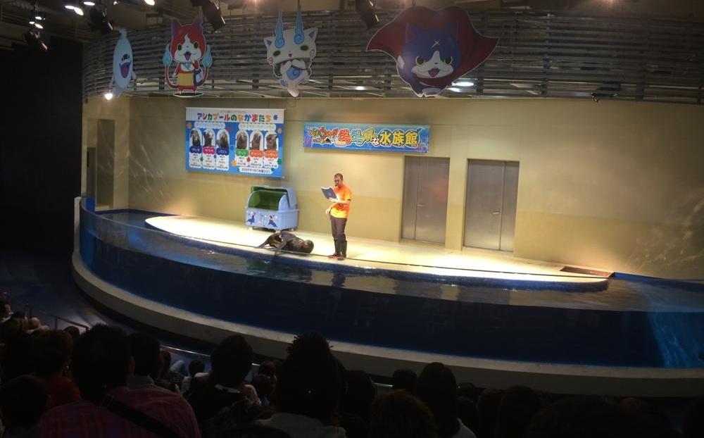 エプソン品川アクアスタジアムのアシカショー