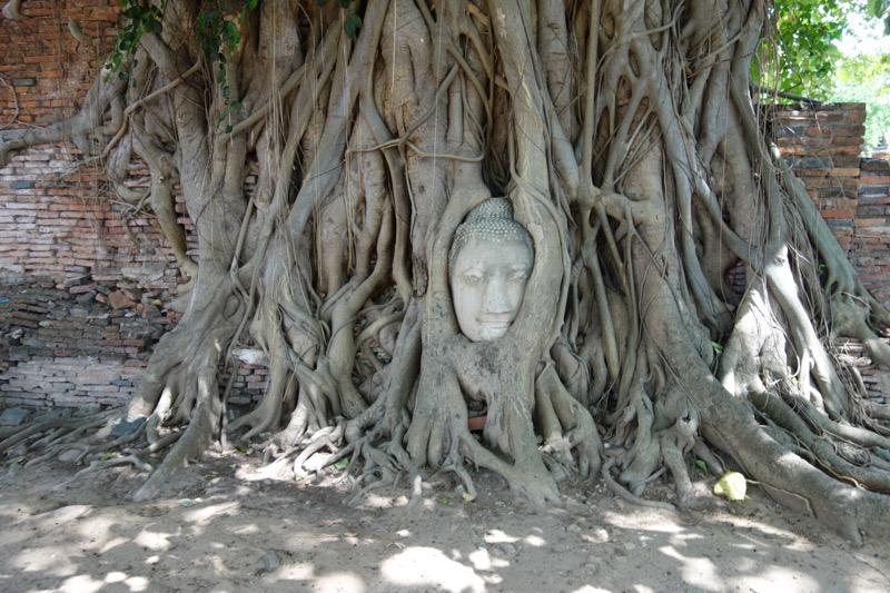 頭が樹木に埋まってしまった仏像