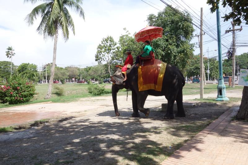 象を発見!