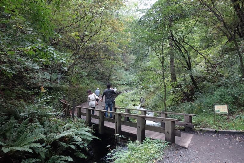 自然豊かな遊歩道
