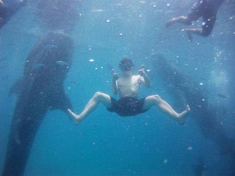 ジンベイザメと一緒に泳げるのはオスロブだけ!