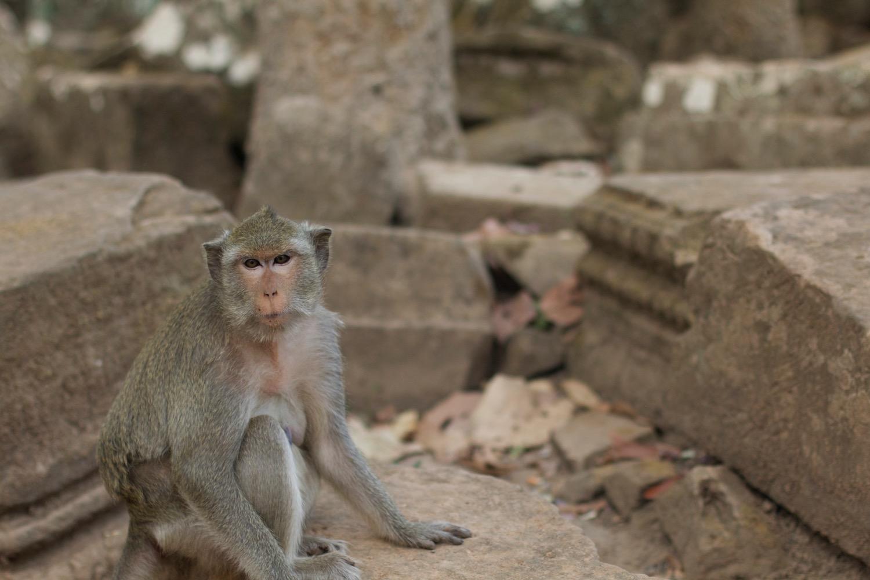 アップで猿を撮影