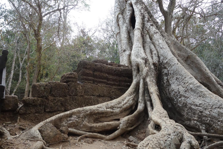 樹木に侵食される壁