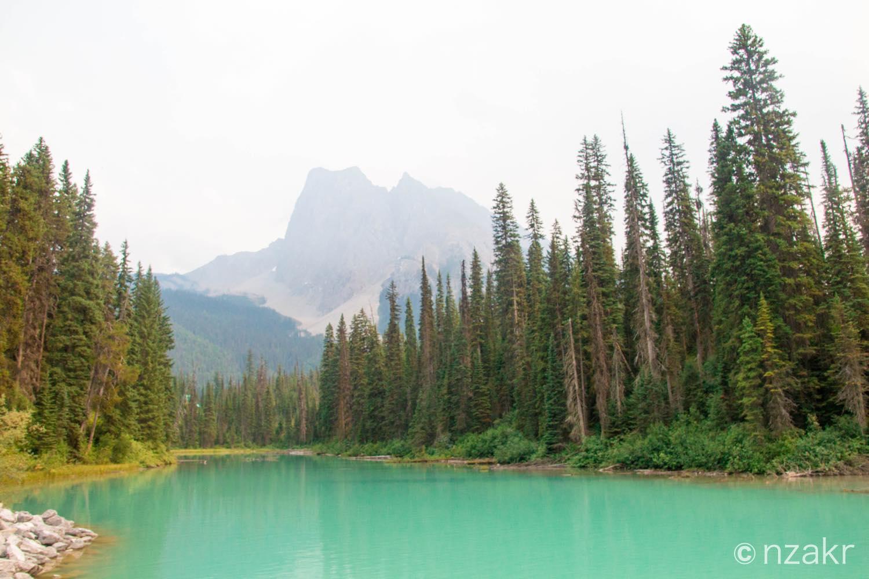 湖の周りには針葉樹林