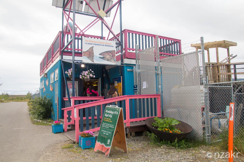 Fishladder(鮭の観測所)