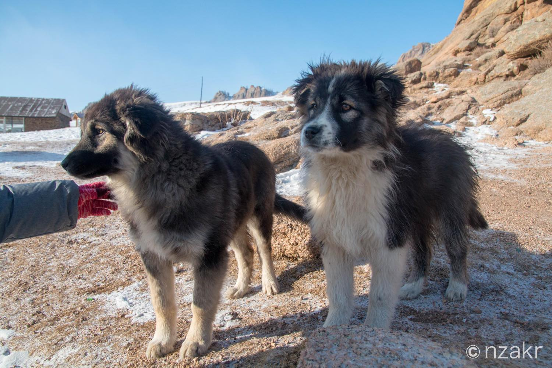 岩山付近にいた犬